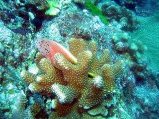 Bubba Diving Phuket © 29cm