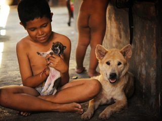 Bali Animal Welfare Association © Bali Animal Welfare Association