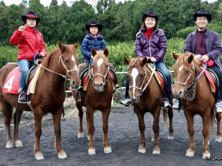 Seokwang Horse Riding Center