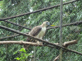 Philippine Eagle Centre
