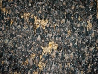 Monfort Bat Sanctuary © MONFORT BAT SANCTUARY