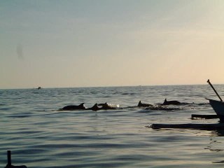 Dolphin Watching at Lovina