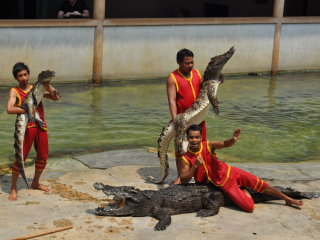 Samut Prakarn Crocodile Farm © lean2write