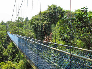Tree Top Walk - MacRitchie