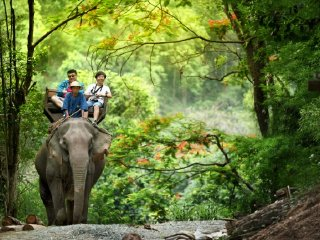 Mae Sa Elephant camp - Long Neck Village - Orchid and Butterfly Farm -Tiger Kingdom - Handicraft village