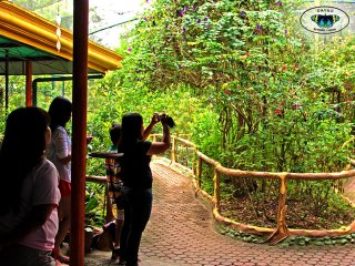 Davao Butterfly House © Davao Butterfly House