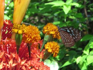 Butterfly Park & Insect Kingdom © tripadvisor