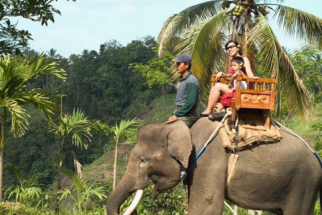 Bali Elephant Ride Tour