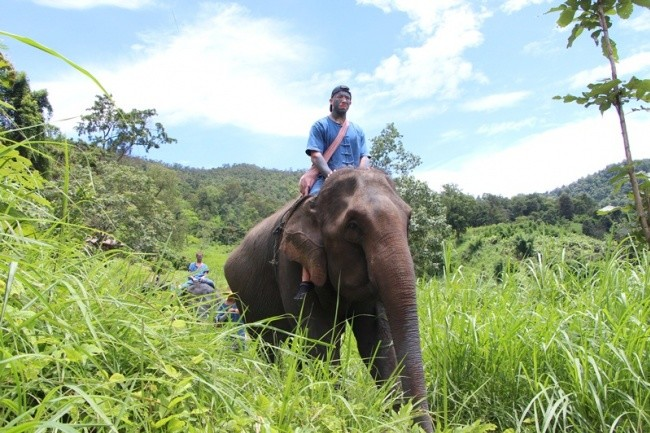 Half day Afternoon elephant training and long neck village with free transfer to the Tiger Kingdom