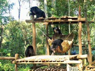 Bear Rescue Center (Tat Kuang Si Park)