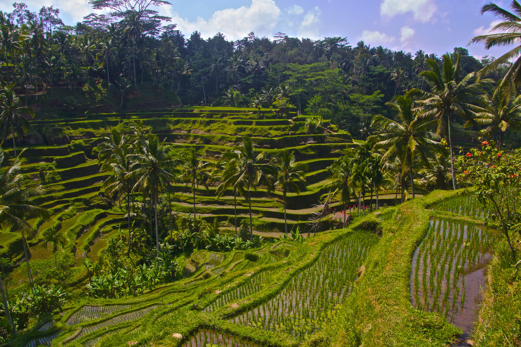 Tegalalang rice terrace in bali attraction in bali for Tegalalang rice terrace ubud