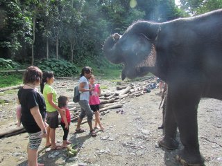 Washing Elephants in Tangkahan © Sumatra EcoTravel