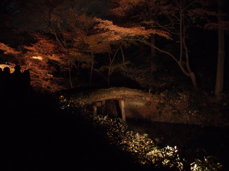 AUTUMN ILLUMINATION AT RIKUGIEN GARDEN