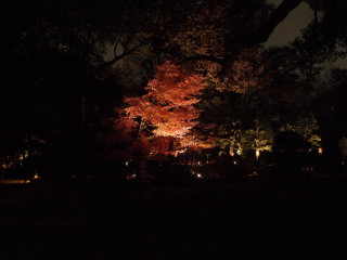 AUTUMN ILLUMINATION AT RIKUGIEN GARDEN © Guilhem Vellut