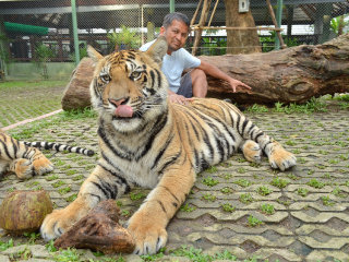Tiger Kingdom Phuket © Rocky A