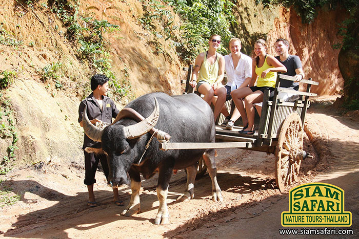 Siam Safari 4 in 1 Safari tour