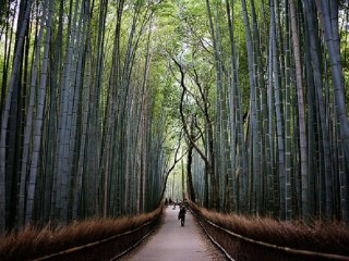 The best budget 3-day trip to Kyoto for family © Janet