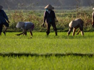 AGRICULTURAL TOUR: RIDE AND RICE © Hoianfoodtour