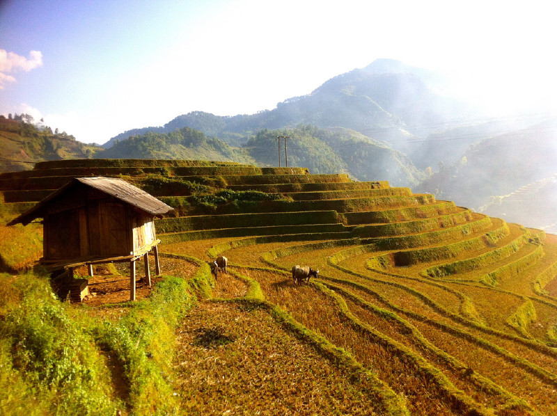 VIETNAM RICE TERRACES – Motorbike Sapa – Mu Cang Chai tour in Hanoi - Activity in Hanoi, Vietnam - Justgola