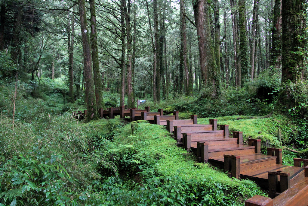 Alishan Forest Recreation Area in Chiayi - Attraction in Chiayi ... Clouds