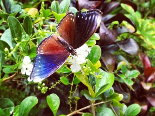 Simply Butterflies Conservation Center