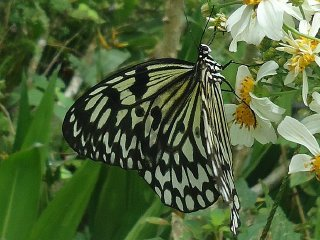 Simply Butterflies Conservation Center © Obsidian Soul