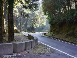 Zhushan Forest Road