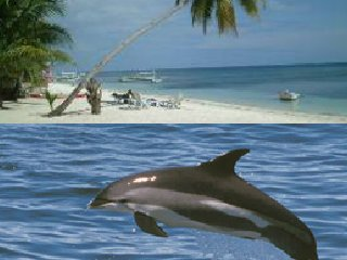 Dolphin Watching and Island Hopping Tour