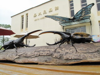 National Chiayi University (NCYU) Insect Museum © ncyu.edu.tw
