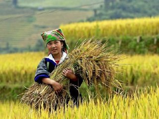 Discovery the Best Viet Nam Rice Terrace - Mu Cang Chai Motorbike 3 Days Tour from Hanoi © Zon Trip Travel
