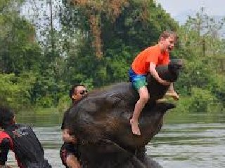 Private transfer: From Suvarnbhumi Airport/ Bangkok hotel to Bamboo Rafting+Elephant Riding Half Day Tour Package 6 hrs.