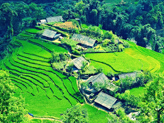 Mu Cang Chai Colorful Cultures - 5 Days 4 Nights