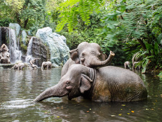 Cub Feeding + Ride, Bath and Swim with Elephants + Monkey Hill FULLDAY TOUR