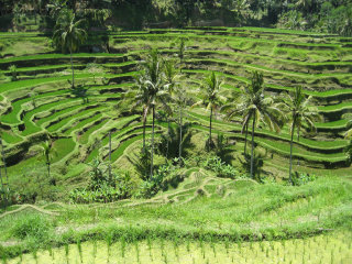 Bali Ubud and Kintamani Volcano Tour