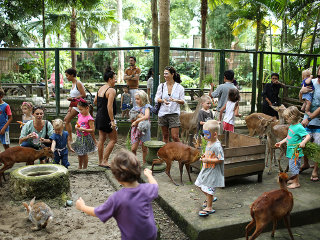 Night at Bali Zoo Park Tour