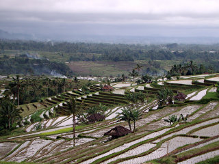 Jatiluwih Rice Terraces © Chrissy Olson