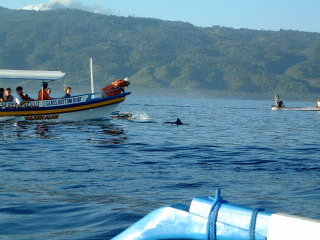 Dolphin Watching at Lovina Beach © hodgers