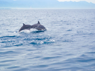 Dolphin Watching at Lovina Beach