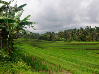 Pupuan Rice Terrace