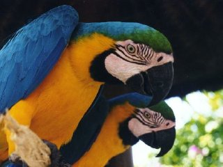 Private Transfer : Ubub Village and Bali Bird Park Tours © baliblisstour