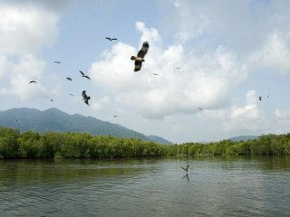 Mangrove Forest & Eagle Watching Half Day Tour © malaysiasightseeingtours
