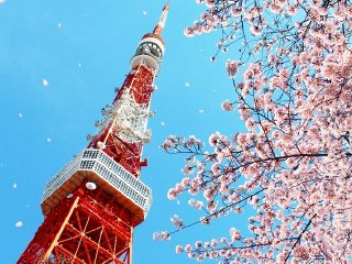 Dynamic Tokyo - Tokyo Tower, Imperial Palace Gardens, Imperial Palace, Sumida River Cruise, Senso-ji Temple (Asakusa), and drive through Ginza © japanican