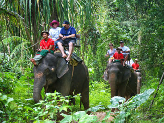 Elephant Trek and Elephant Bath - Half Day
