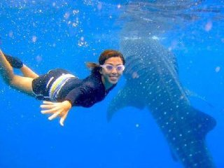 Scuba Diving with the Whale Sharks Tour © cebutours