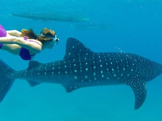 Whale Shark Watching in Oslob © cebutours