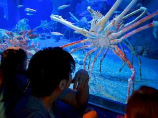 Osaka Bay Area Half Day Tour - Kaiyukan Aquarium & Osaka Bay Cruise © japanican