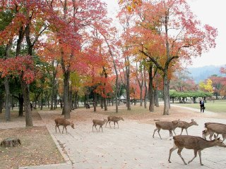 Private Transfer : Nara World Heritage 1-Day Tour ( Vehicle hire for small groups use)