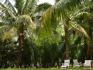 Hoi An Riverside Bamboo Resort © A Google user