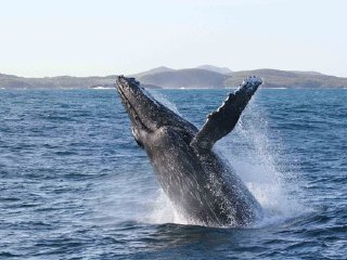 Pamilacan Dolphin & Whale Watching © Boholtours