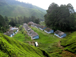 A Day Trip to Cameron Highlands - Kuala Lumpur